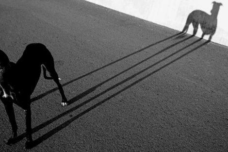 Schattenspiele (2)