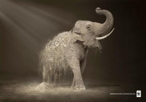 "WWF Plakatkampagne ""Desertification destroys 6.000 species every year"""