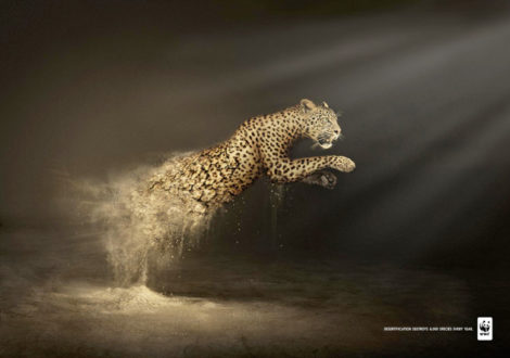 "WWF Plakatkampagne ""Desertification destroys 6.000 species every year"""