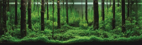 Gewinner des International Aquatic Plants Layout Contest 2012
