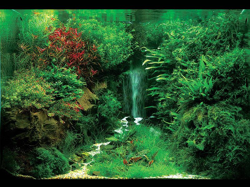 Aquascaping Landschaften Unter Wasser Gestaltet Fw Look