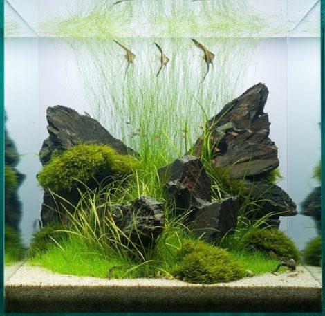 Ein bei Wettbewerben recht seltener Aquarienwürfel