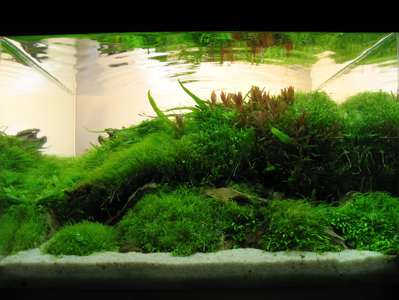 Aquascaping – Landschaften unter Wasser gestaltet - FW: look ...