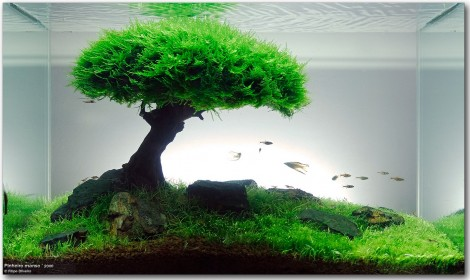 Aquascape Inspiration : Filipe Oliveiras
