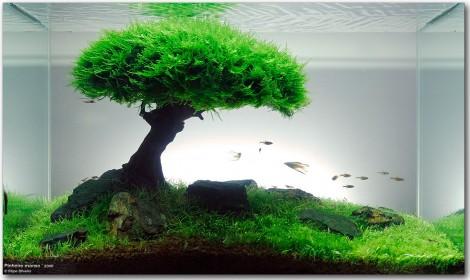 """Filipe Oliveiras """"Pinheiro Manso"""" als gelungenes Vorzeigebecken für Bäume unter Wasser"""