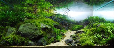 Eins meiner persönlichen Favoriten unter den Aquascapes - ein Becken vom japaner Cliff Hui