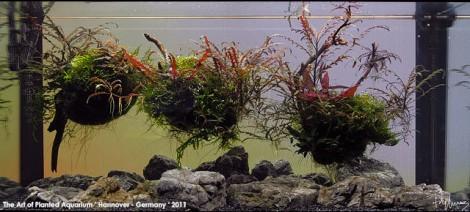 Ein spektakuläres Aquarium von O. Knott - ein erfolgreicher Deutscher im Aquascaping