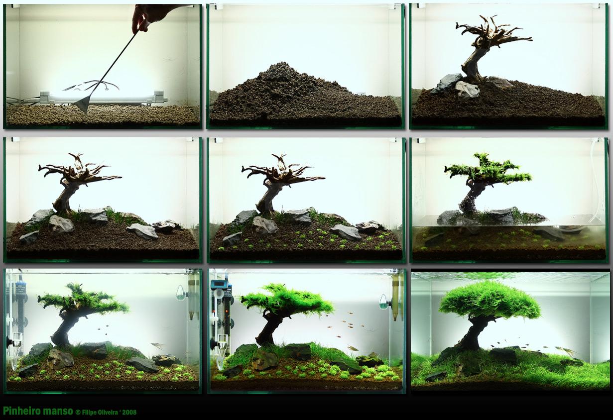 Aquascaping - Landschaften unter Wasser gestaltet - FW: look ...
