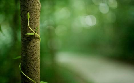 Bokeh eines Waldes, vordergründig eine Ranke