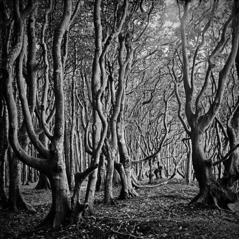 """""""Im Wald"""" von Dr. Ralph Gräf"""