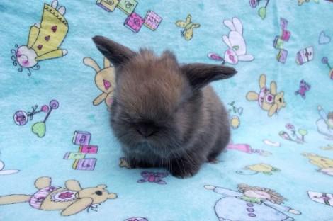I C a bunny