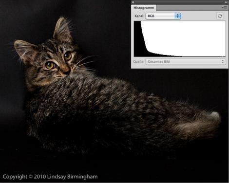 Low Key einer Katze und passendes Histogramm