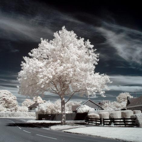 Strahlend weißer Baum und dunkler Himmel