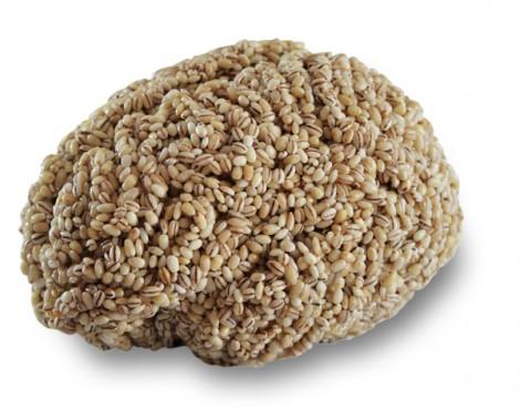Gehirn aus Gerste