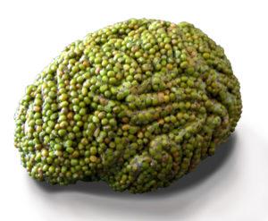 Gehirn aus Sojabohnen
