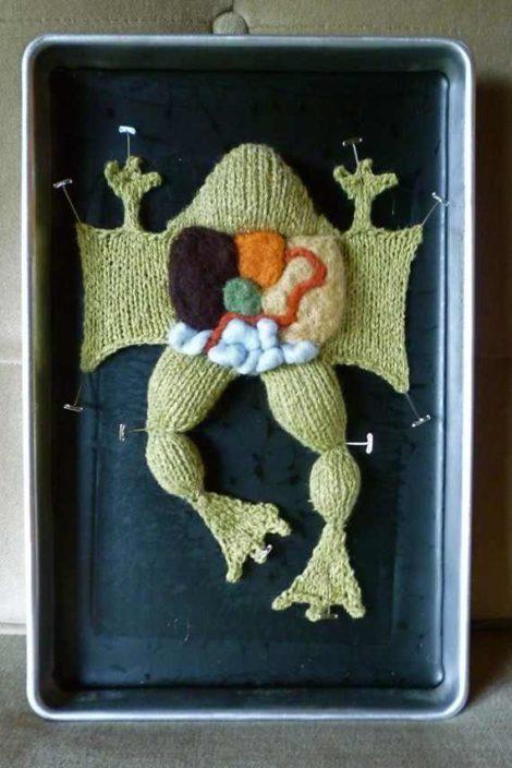 Gehäkelter sezierter Frosch