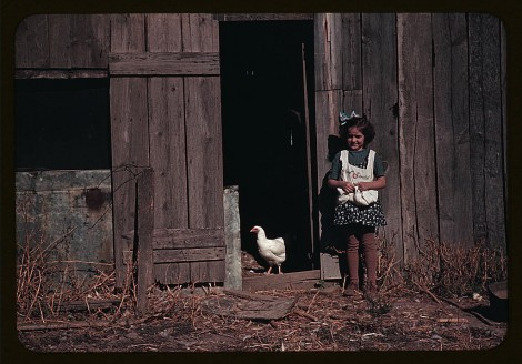 [Girl next to barn with chicken] (LOC)